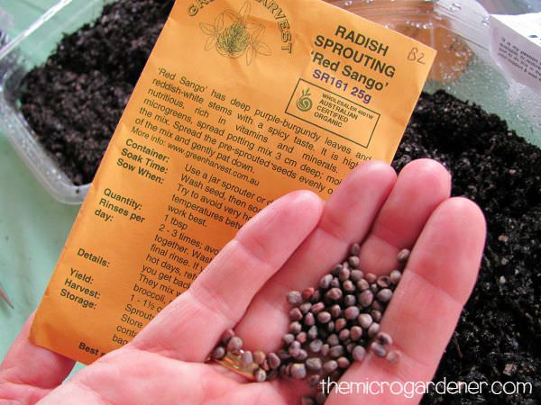 Certified organic radish seeds for sowing microgreens