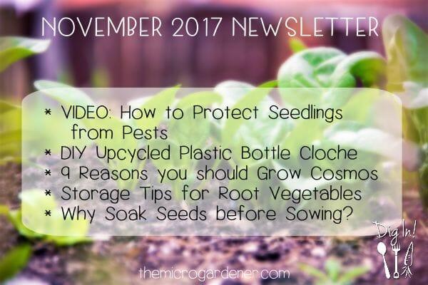 November 2017 Newsletter | The Micro Gardener