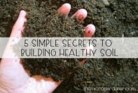 5 Simple Secrets to Building Healthy Soil