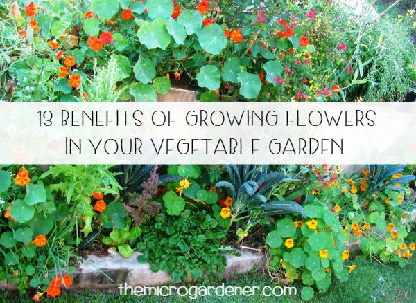 13 benefits of growing flowers in your vegetable garden to improve pollination, reduce weeds + pests, get free fertiliser & plants