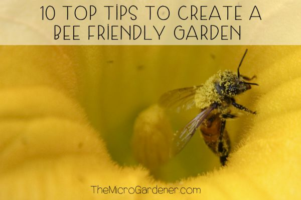 10 Tops Tips to Create a Bee Friendly Garden