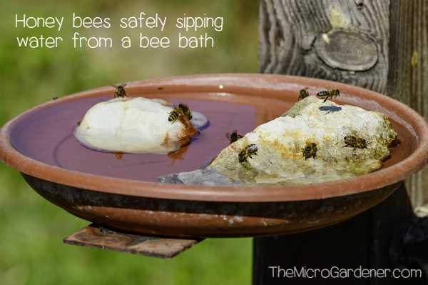 A Bee Bath with a safe landing zone and place to drink without drowning in a bee friendly garden