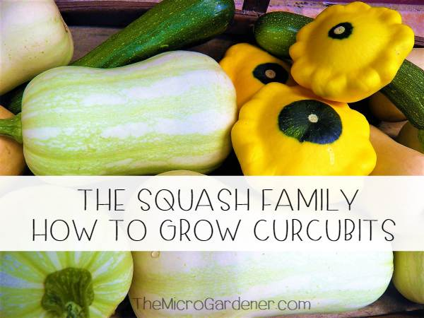 The Squash Family - How to Grow Curcubits