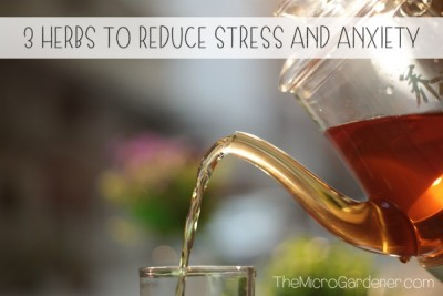 3 Herbs to Reduce Stress and Anxiety