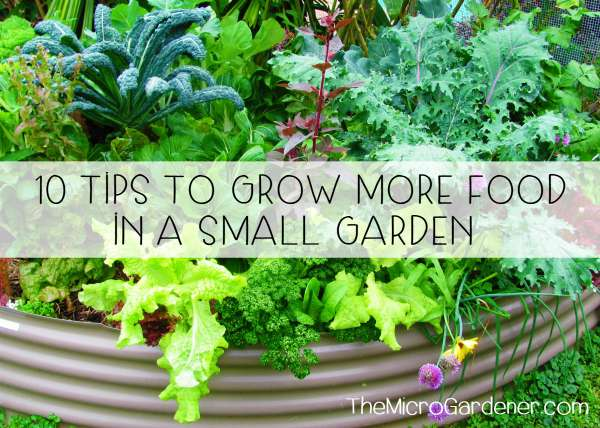 10 tips to grow more food in a small garden