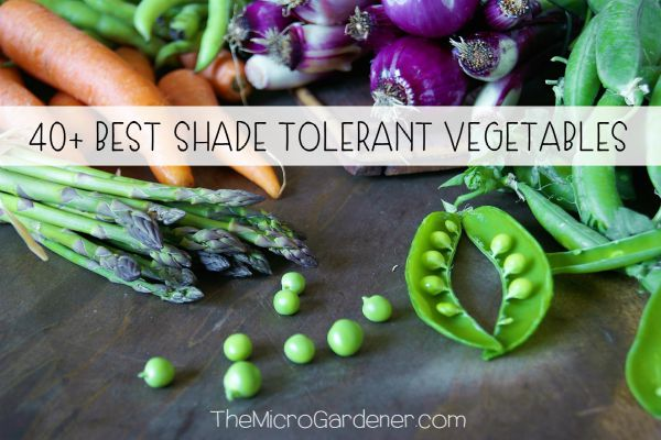 40+ Best Shade Tolerant Vegetables that Grow in Shade or Partial Sun