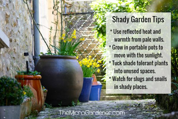 Shady garden tips to grow vegetables in shade