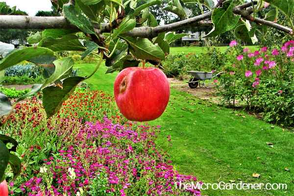 Organically homegrown apples are nutritious without the need for toxic chemicals