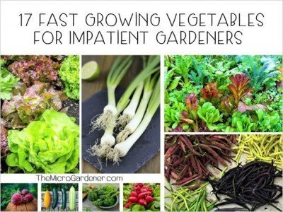 A list of 17+ fast growing vegetables for quick picks in 60 days or less. Includes leafy greens, legumes, roots vegetables + more for healthy 'fast' food! Plus 5 tips to help speed up your harvests.