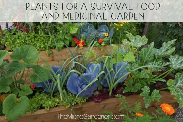 Plants for a Survival Food and Medicinal Garden