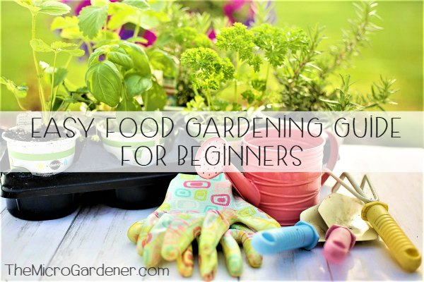 Easy Food Gardening Guide for Beginners