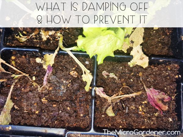 What is Damping Off and How to Prevent It - Symtoms, Causes & Treatment